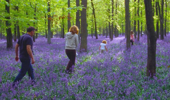 Walking in Bluebell Woods © CPRE