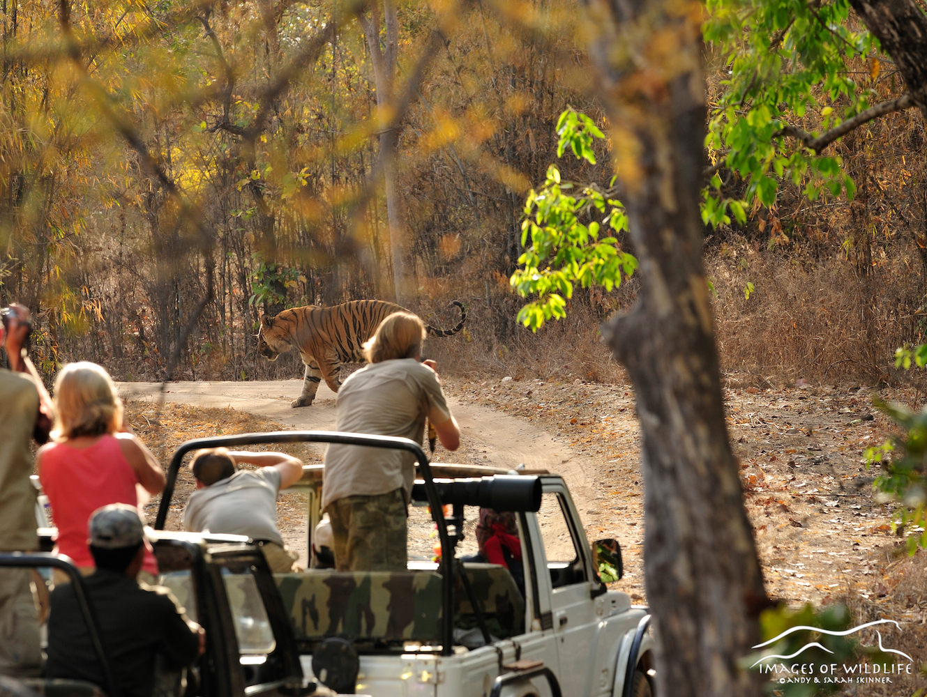 Andy photographing Bengal Tiger in Bandhavgarh, India