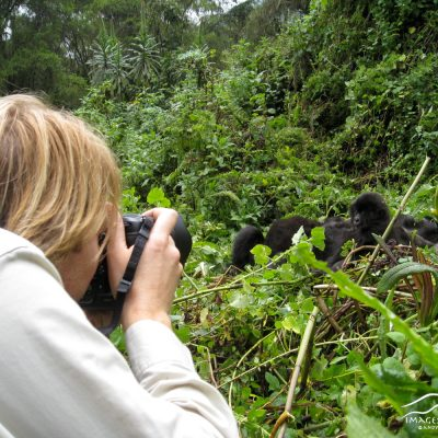 Andy photographing mountain gorillas in Rwanda