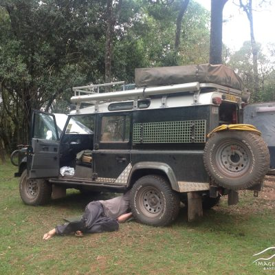 Bush repairs