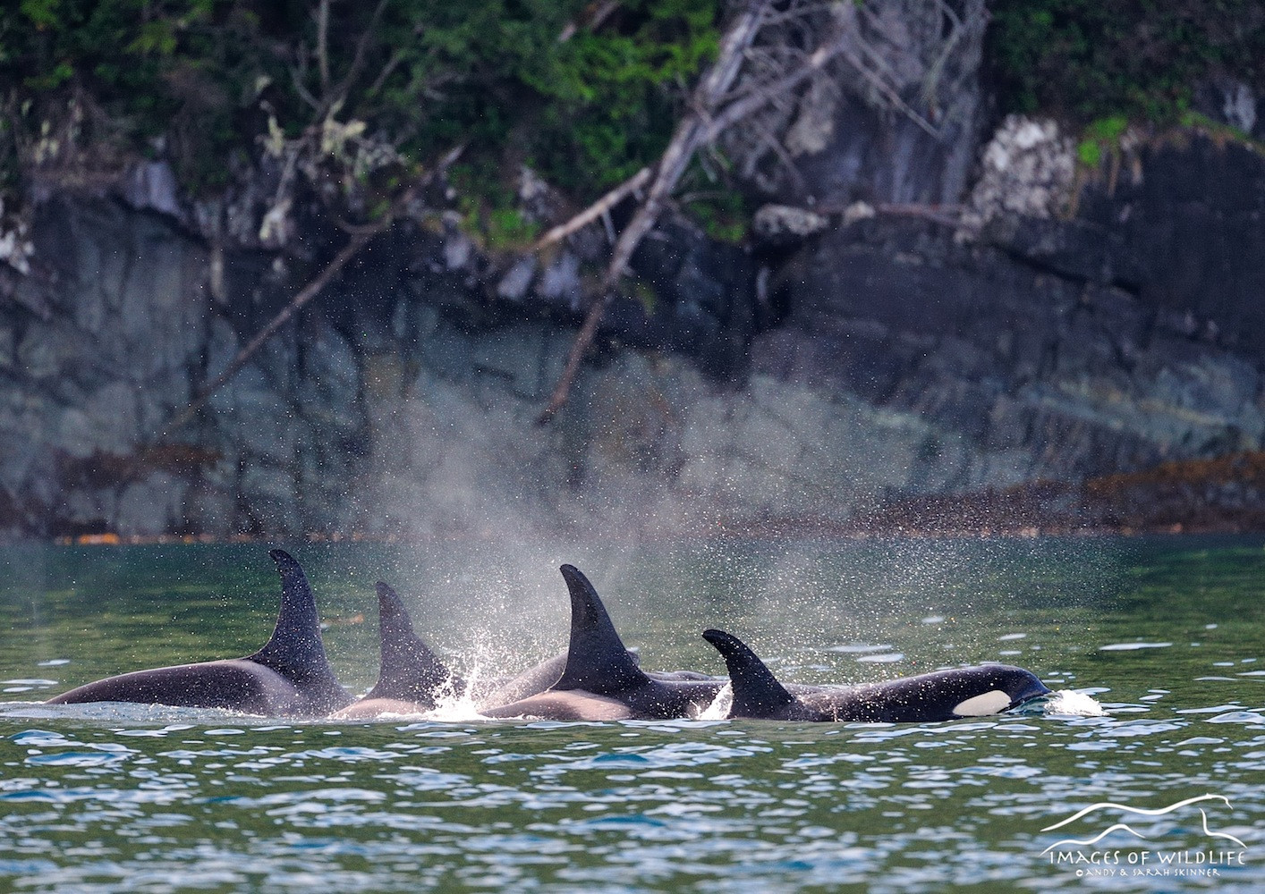 Orca 001
