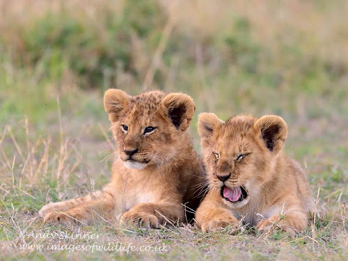 Olkeju Rongai cubs and Notch boys!