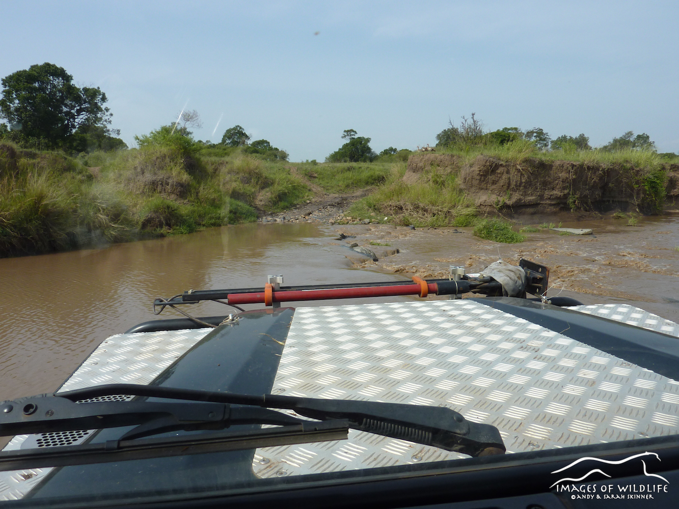 River crossing, Maasai Mara, Kenya