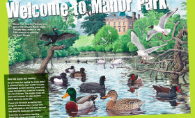 Wildfowl illustration for Manor Park Country Park