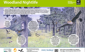 'Woodland Nightlife' bat id panel for Berks, Bucks and Oxon Wildlife Trust